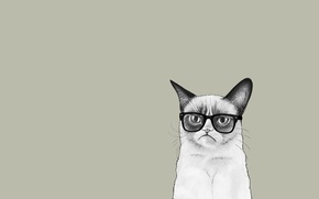 Картинка кошка, кот, минимализм, очки, Соус Тардар, Grumpy Cat, Tardar Sauce, Сердитый Котик