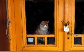 Картинка кошка, замок, дверь