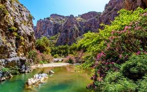Картинка небо, деревья, цветы, горы, озеро, пальма, скалы, камень