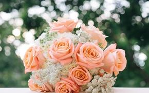 Картинка розы, букет, бутоны, свадебный букет