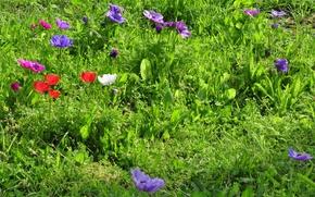Картинка трава, green, colors, весна, Поляна, grass, цветочки, field, flowers, spring