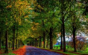 Картинка дорога, осень, лес, листья, деревья, природа, colors, colorful, forest, road, trees, nature, autumn, leaves, walk, …