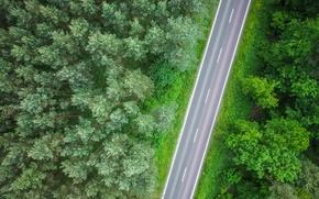 Картинка дорога, деревья, лес, трасса