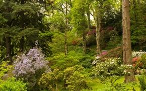 Обои великобритания, парк, bodnant gardens wales