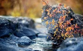 Картинка осень, листья, ручей, камни, куст, ветка, желтые