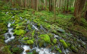 Обои лес, деревья, ручей, камни, мох, Olympic National Park