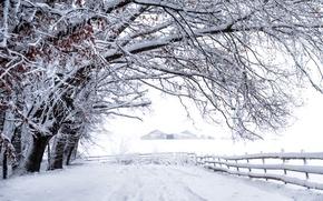 Обои зима, снег, забор
