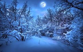 Картинка зима, снег, деревья, природа, елка, Новый год, Nature, new year, trees, winter, snow, merry christmas, …