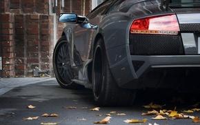 Обои авто, листья, черный