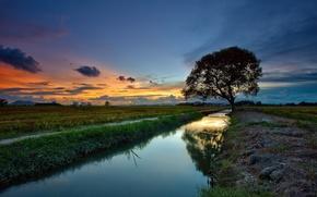 Картинка дерево, река, пейзаж, закат