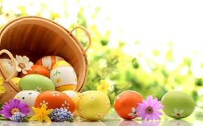 Картинка цветы, праздник, корзина, яйца, весна, Пасха, лаванда, нарциссы, Easter, космея, пасхальные