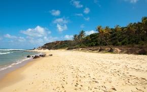 Обои море, пальмы, пляж, бразилия