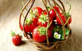Картинка фон, цвет, размытость, клубника, ягода, корзинка