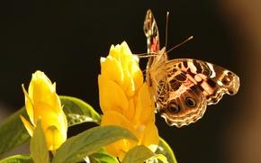 Картинка листья, цветы, фон, бабочка, желтые