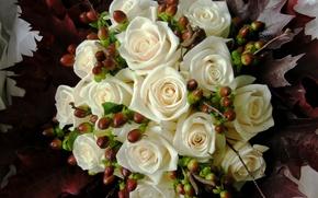 Обои букет, розы, белый, цветы, фото