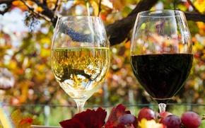 Картинка осень, листья, отражение, вино, красное, белое, бокалы