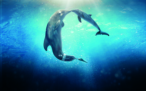 Обои Dolphin, Sun, Water, Line, Wallpaper, Family, Ocean, Year, Sea, Morgan Freeman, Movie, Film, 2014, Animals, ...