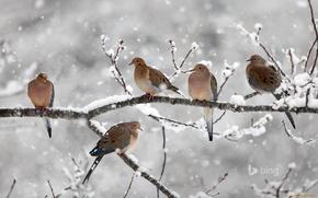 Картинка животные, птицы, ветка