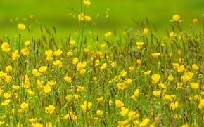 Обои поле, трава, цветы, растения, луг
