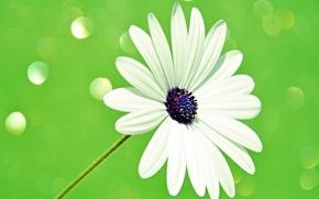Картинка цветок, свет, лепестки, стебель, блик