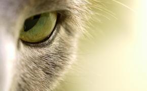 Картинка кошка, макро, глаз
