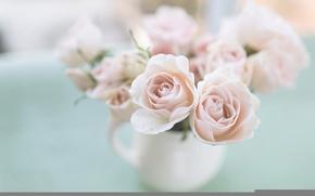 Обои flowers, garden, pale, roses, цветы, сад, бледный