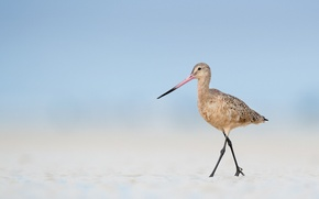 Картинка beach, bird, sand, wildlife