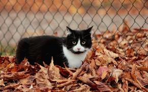 Картинка кот, листья, черно-белый, ограждение, осенние