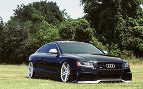 Картинка Audi, Авто, Трава, Деревья, Тюнинг, Машины, Поляна, Диски, Посадка