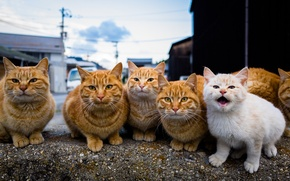 Обои взгляд, коты, группа, семья