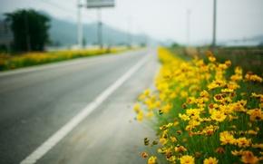 Картинка дорога, макро, roadside, жёлтые цветы