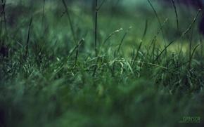 Обои зеленая фигня, макро, трава, концентрация