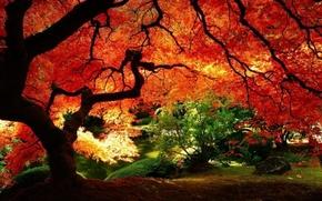 Картинка листья, ветки, красный, дерево, листва, Осень, кусты, багряный, солнечный свет.