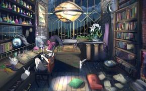 Картинка аниме, кролик, библиотека, ведьма, алхимия