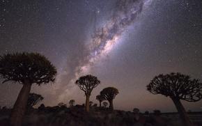 Картинка небо, звезды, облака, деревья, ночь