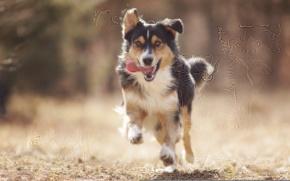 Картинка взгляд, друг, собака, бег