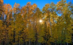 Картинка осень, лес, солнце