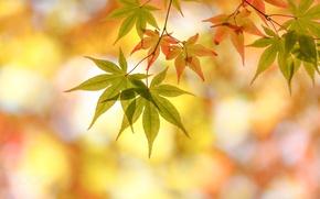 Картинка осень, макро, листва, боке