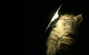 Обои котенок, свет, лампа