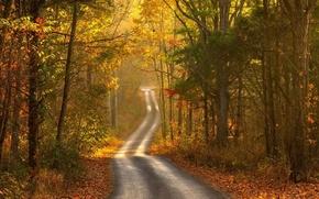 Картинка дорога, осень, лес, пейзаж, природа