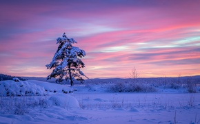 Картинка сугробы, снег, зима, Швеция, Вермланд, сосна, дерево, Sweden, Arvika, Varmland County, Арвика, закат