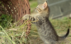 Картинка трава, корзина, котёнок