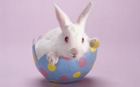 Обои Розовый Фон, Кролик, Белый