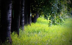 Картинка трава, стволы, листва, Деревья, аллея