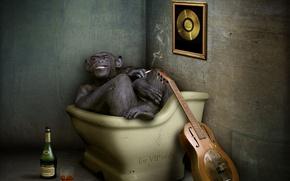 Картинка гитара, обезьяна, коньяк