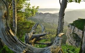 Картинка Швейцария, деревья, скалы, горы, пейзаж