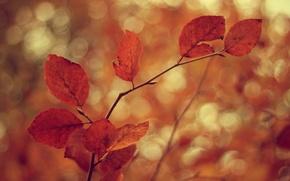 Картинка холод, осень, листья, ветки, дерево, ветер, ветви, листва, листок, фокус, размытие, ветка, листочки, листочек, листки, …