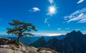 Картинка небо, солнце, горы, дерево, Франция, France, Корсика, Corsica, Aiguilles de Bavella, Иглы Бавеллы, Конка, Conca, ...