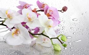 Обои стекло, вода, цветы, ветки, капельки, орхидея