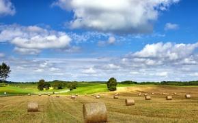Картинка поле, лето, пейзаж, природа, сено
